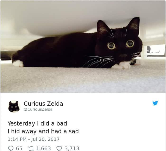 Tweets By Curious Zelda i did a bad