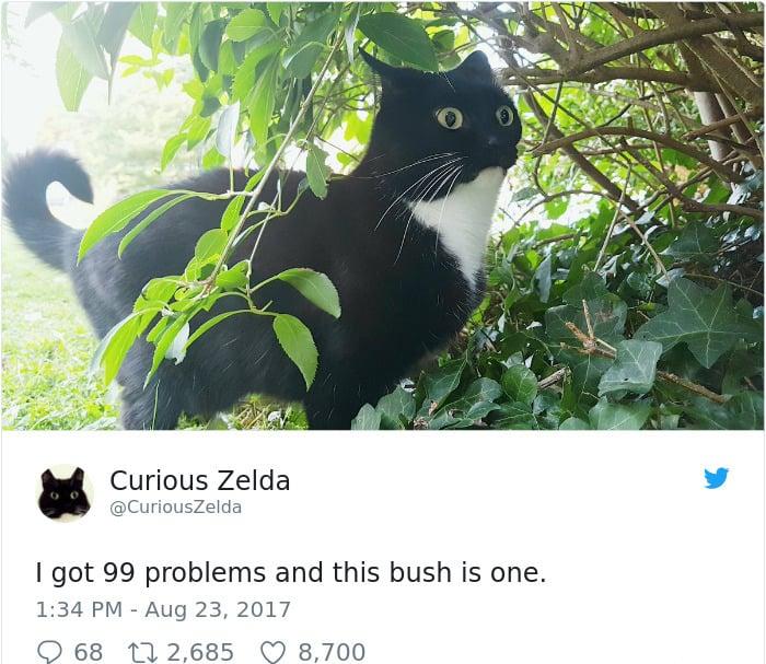 Tweets By Curious Zelda i got 99 problems