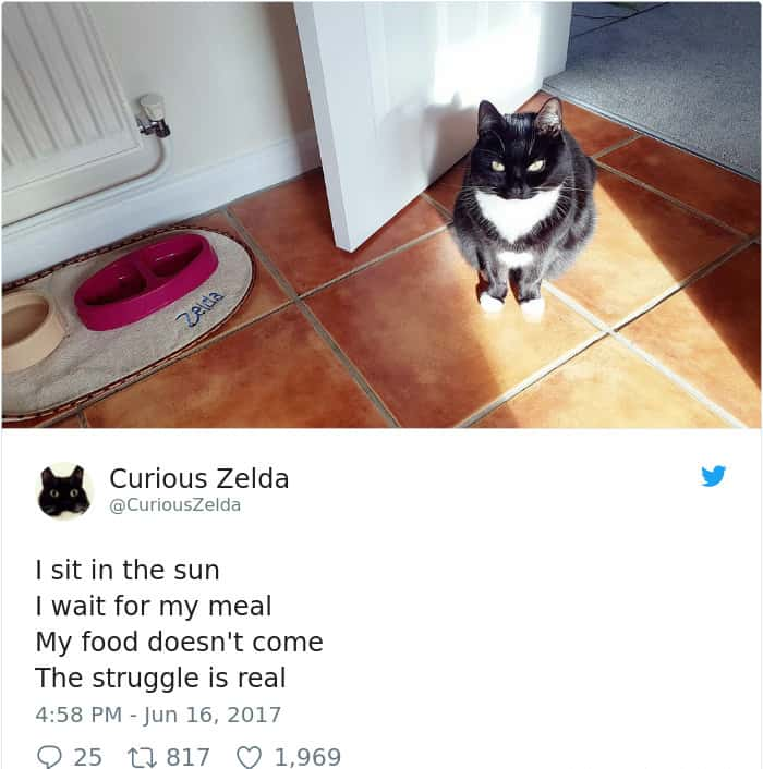 Tweets By Curious Zelda i sit in the sun