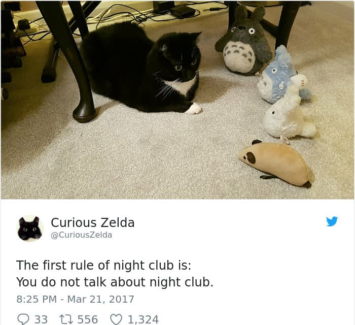 Tweets By Curious Zelda night club