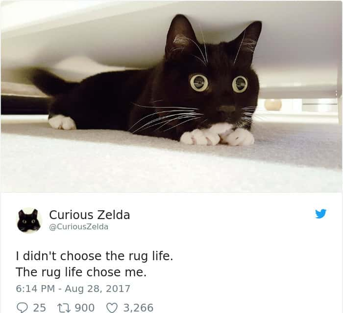 Tweets By Curious Zelda rug life