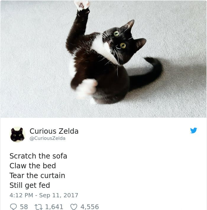 Tweets By Curious Zelda scratch the sofa