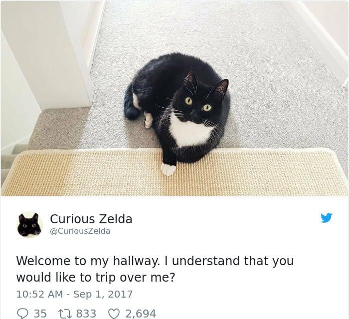 Tweets By Curious Zelda trip over me