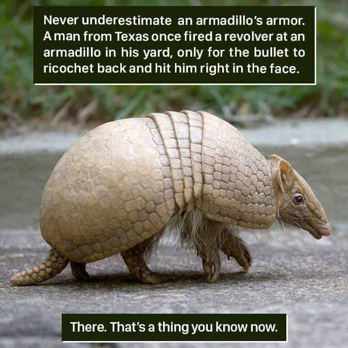 Weird Animal Facts armadilo armor