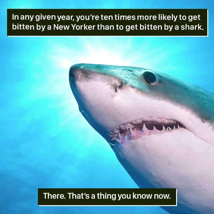 Weird Animal Facts bitten by a new yorker