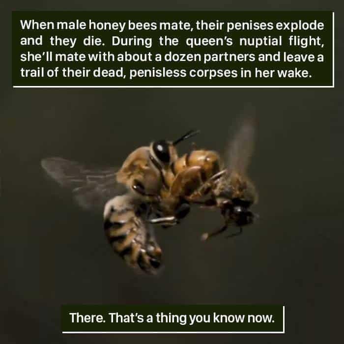 Weird Animal Facts honey bees