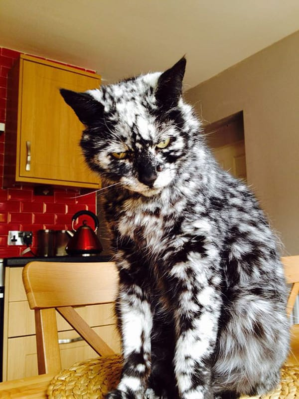 Amazing Cats That Have Crazy Fur Markings