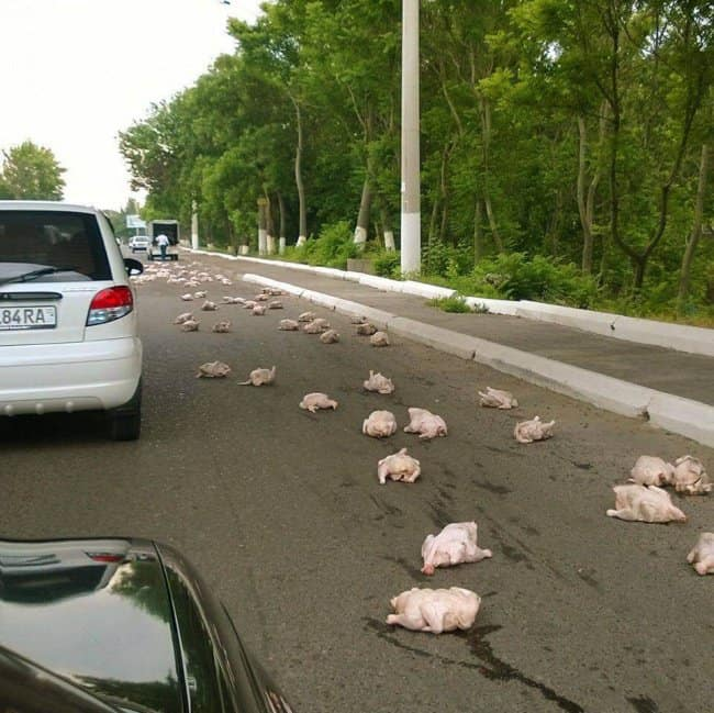 Awful Day At Work chickens all over road