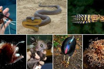 Creepy Critters That Belong In Your Nightmares