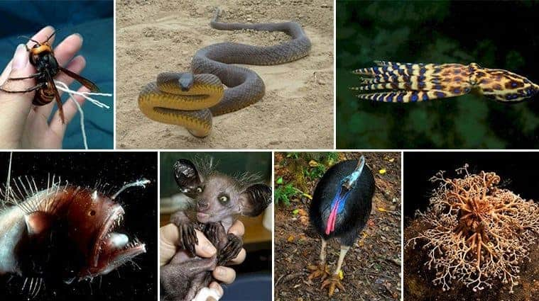 Creepy Critters That Belong In Your Nightmares
