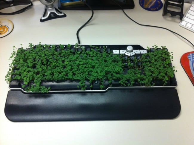 Funny Office Employees growing keyboard