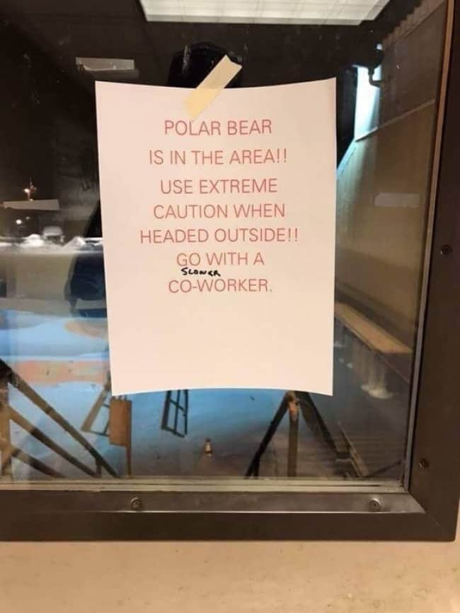 Funny Office Employees polar bear warning