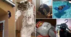 Hilarious Times That Cats Have Had Epic Fails