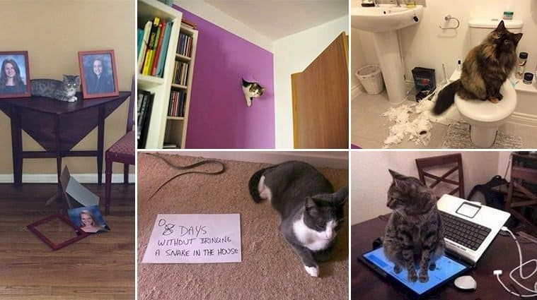 Images Of Mischievous Cats Causing Trouble