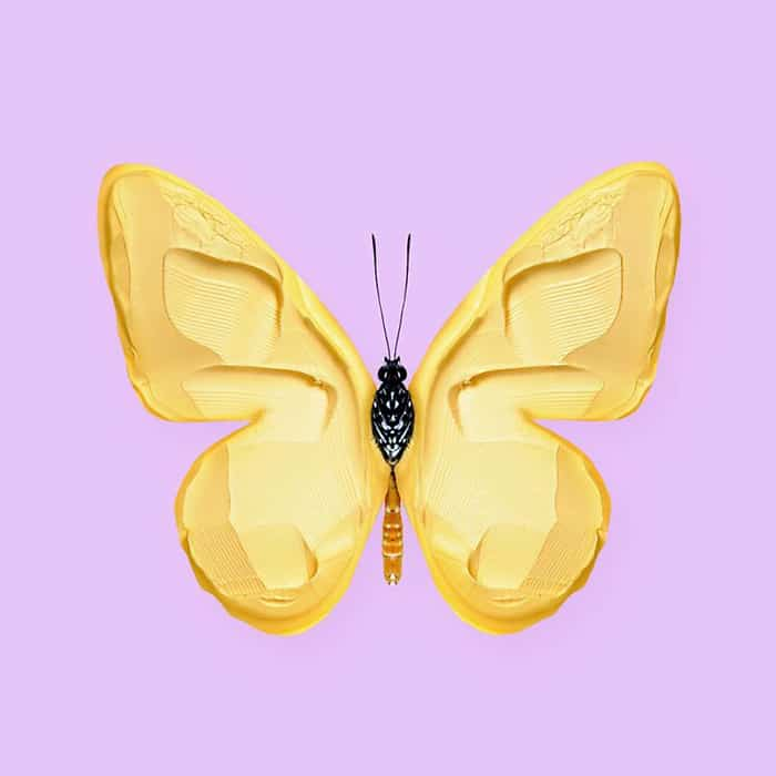 Mind Boggling Images unexpected objects butterfly