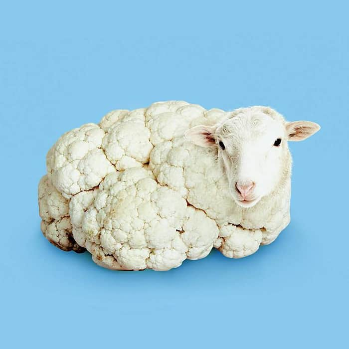 Mind Boggling Images unexpected objects cauliflower lamb