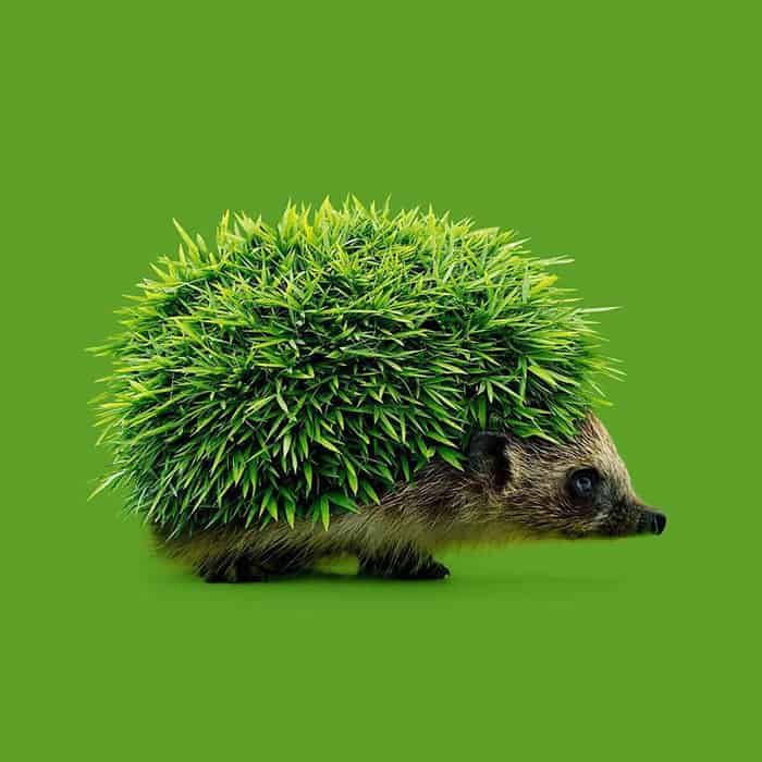 Mind Boggling Images unexpected objects hedgehog