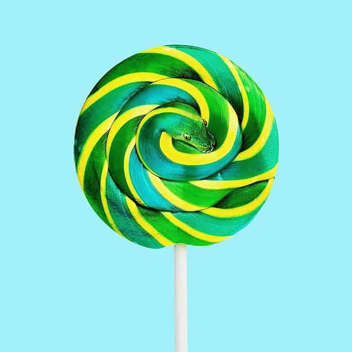 Mind Boggling Images unexpected objects snake lollipop