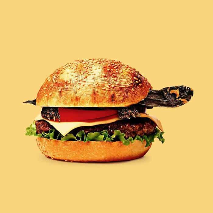 Mind Boggling Images unexpected objects turtle burger