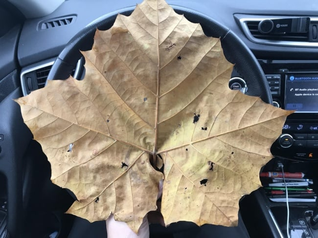 People Who Found Awesome Things huge leaf