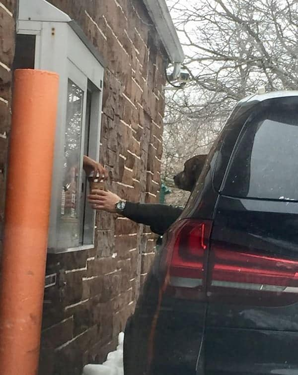 Perfectly Timed Photos dog getting coffee