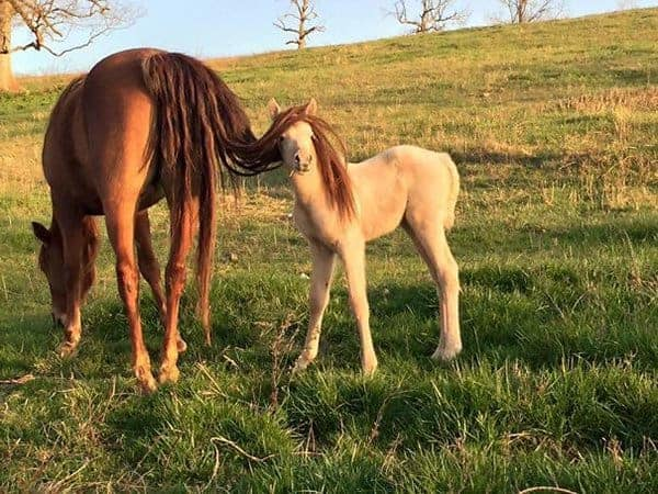 Perfectly Timed Photos horse with tail on face