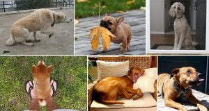 Things Dogs Do That Mean They Are Trying To Communicate With You