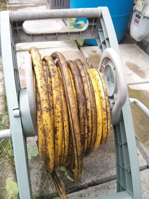 Times Things Looked Like Food hose banana skin