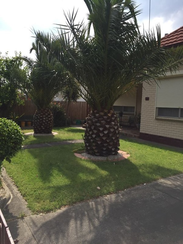 Times Things Looked Like Food pineapple tree