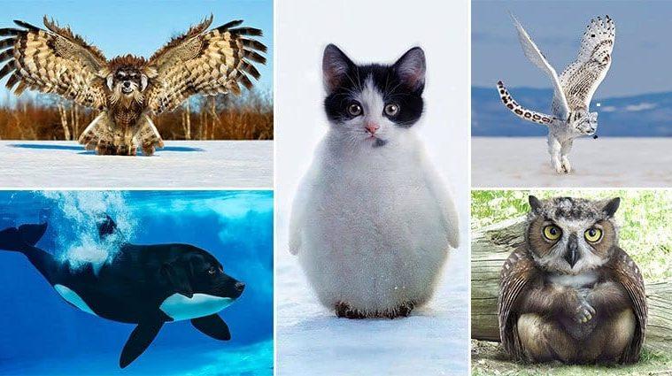 Weird And Wonderful Animal Hybrids
