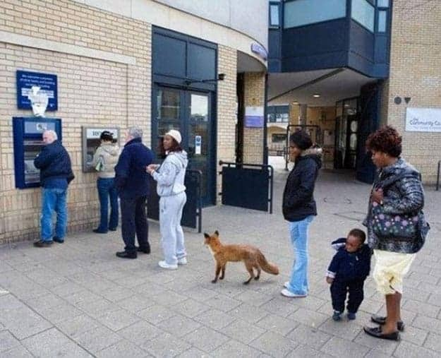 animal-lining-up-at-an-atm-machine