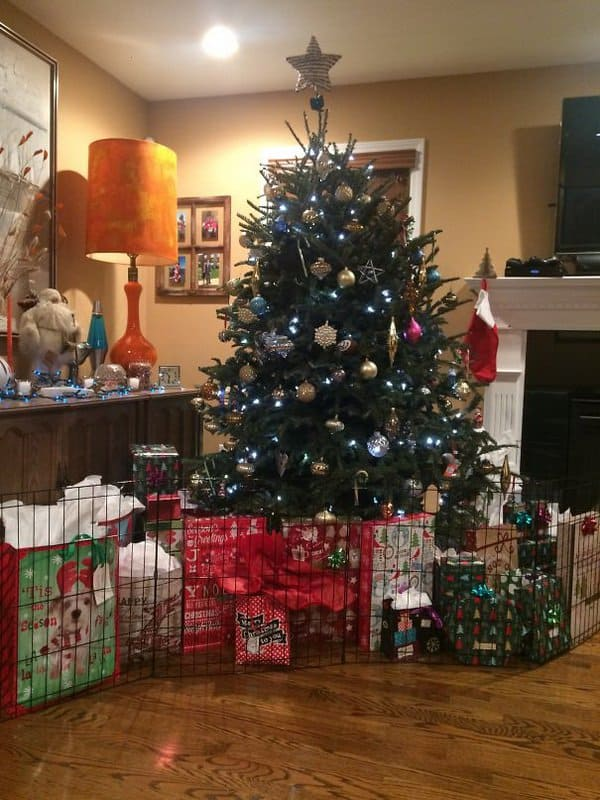 christmas-tree-inside-dog-cage