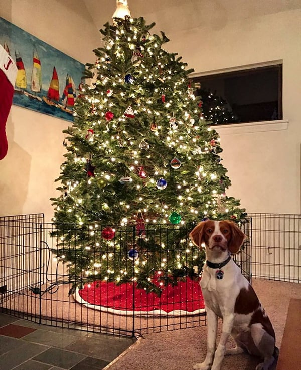 dog-proofed-christmas-tree