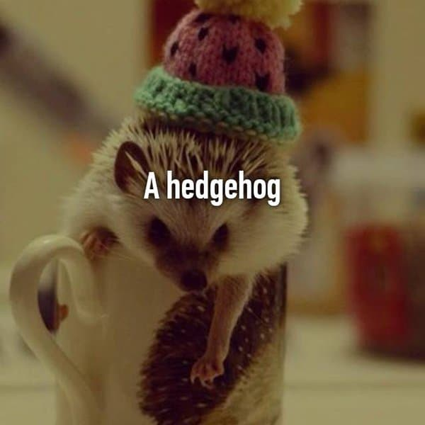 Funny Things That Drunk People Bought hedghog