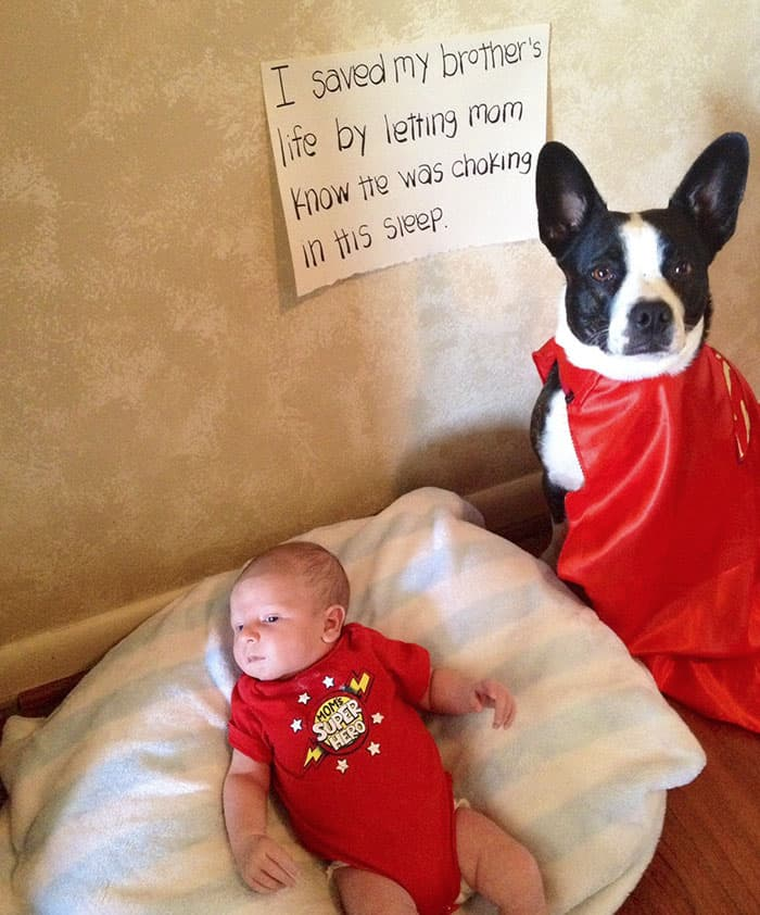 Heroic Dogs abbie and benjamin