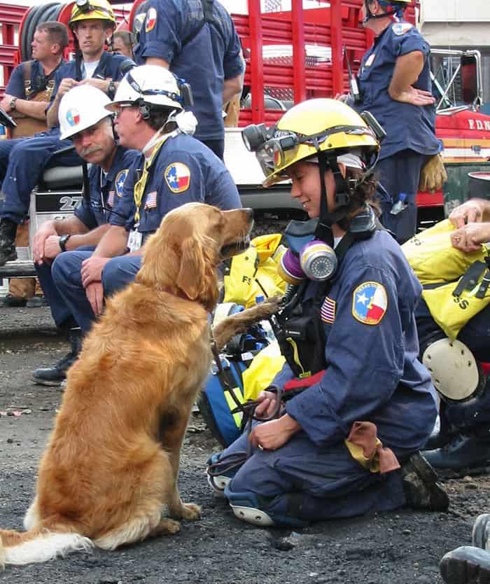 Heroic Dogs groud zero rescue