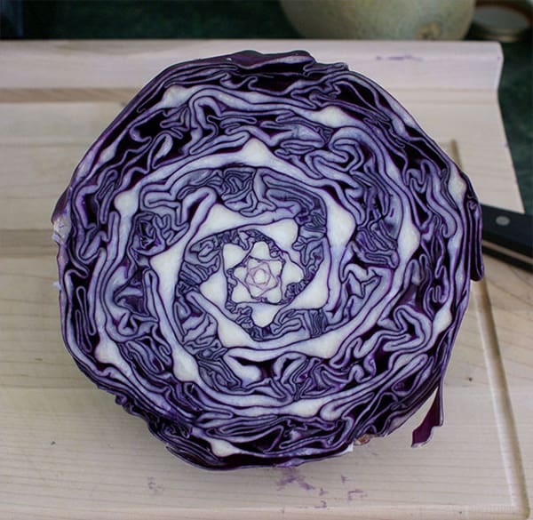 Oddly Satisfying Food Photos natural cabbage