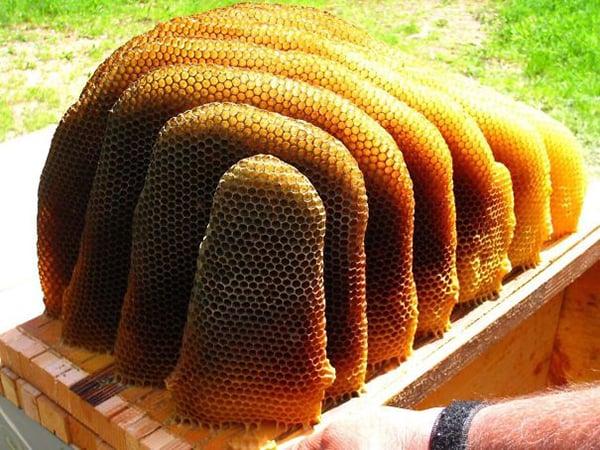 Oddly Satisfying Food Photos natural honeycomb