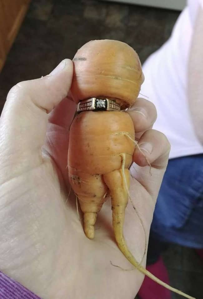 People Who Recovered Their Lost Treasures ring on carrot