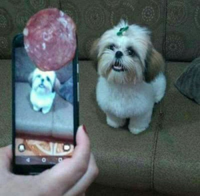 People Whose Creativity Knows No Bounds sausage photo