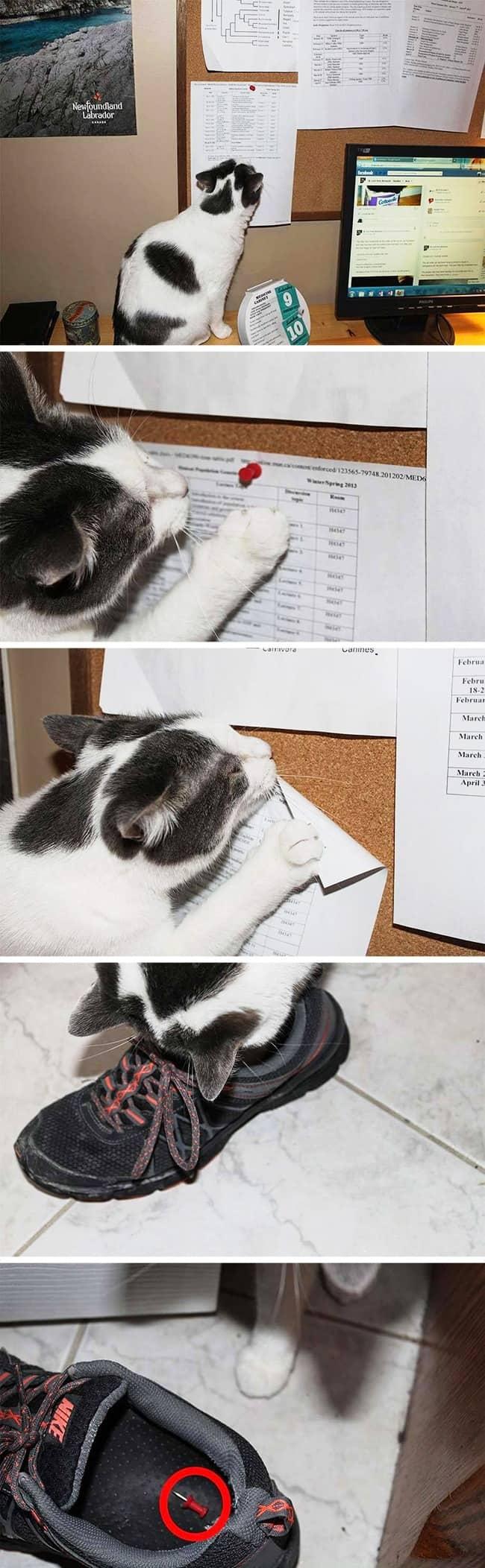 cat_gets_revenge