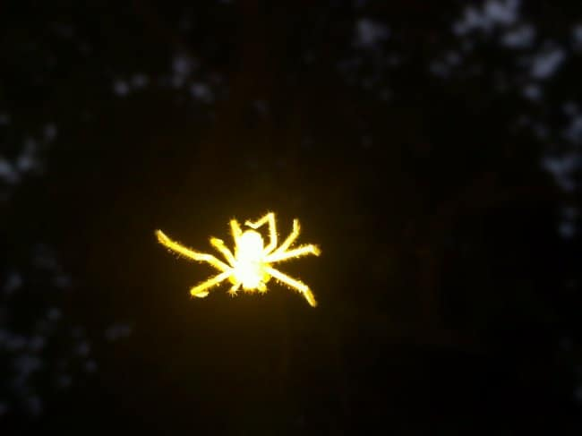 glowing-spider