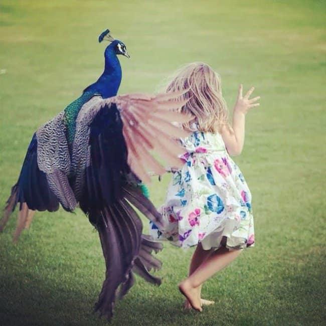 never_provoke_a_peacock