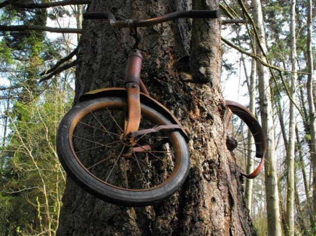 old-bike-chained-to-a-tree