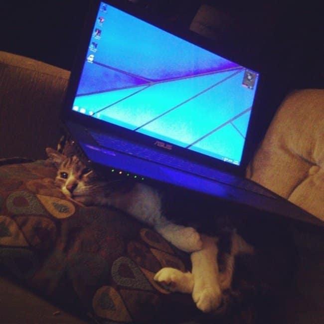 revenge_for_cat_stepping_on_laptop