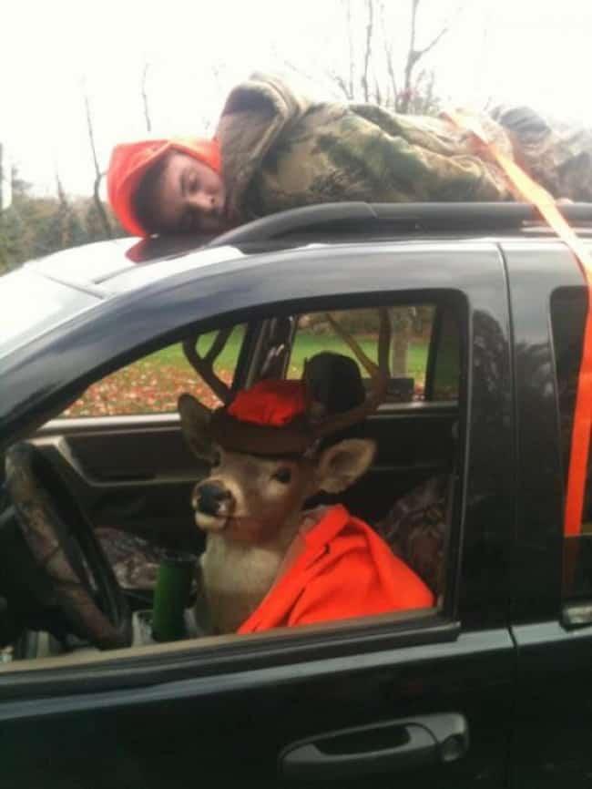 deer-me