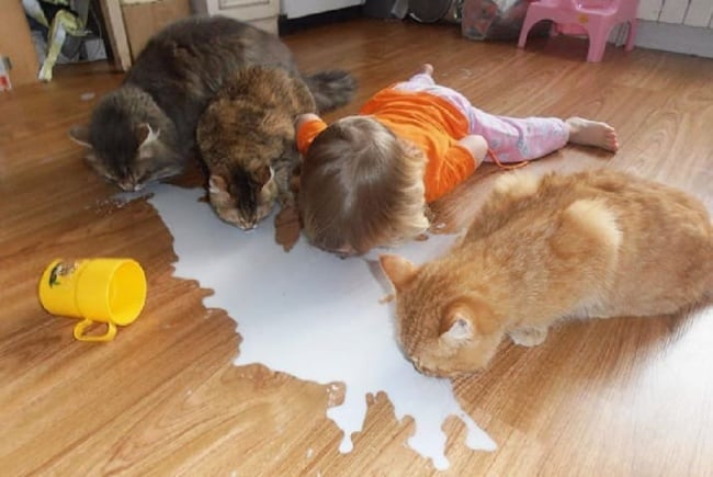 drinking-milk-with-cats