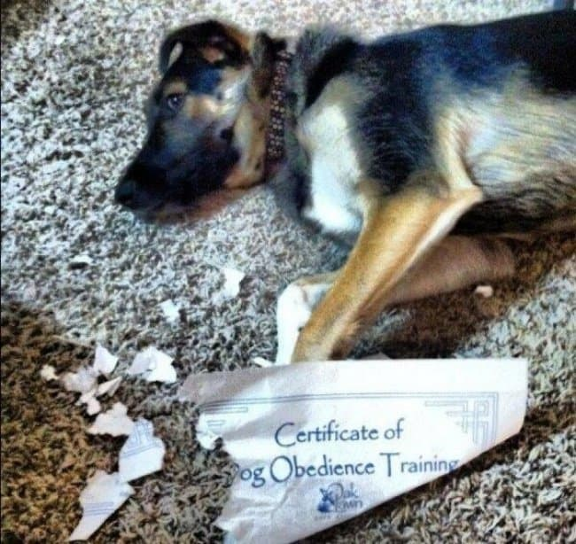 ironic-dog-award