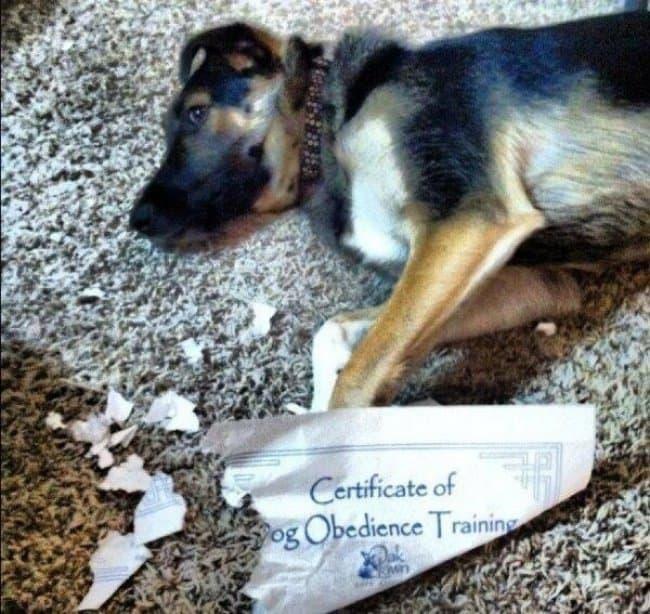 ironic-dog-award