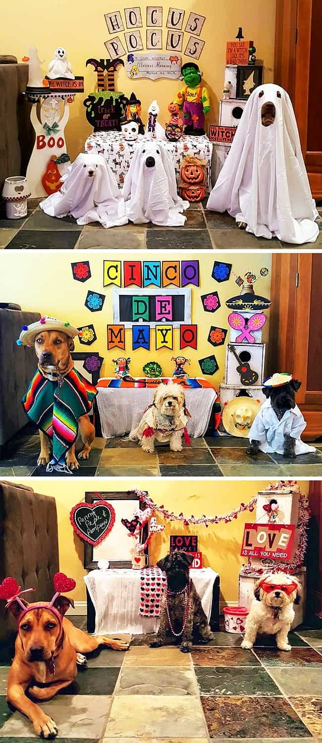 mexican-dogs